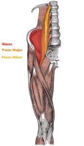 iliopsoas_muscle_lg